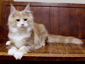 Cartier_kitten4_18042107