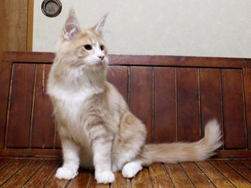 Cartier_kitten4_18042108