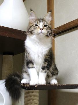 Waco_kitten3_18042103