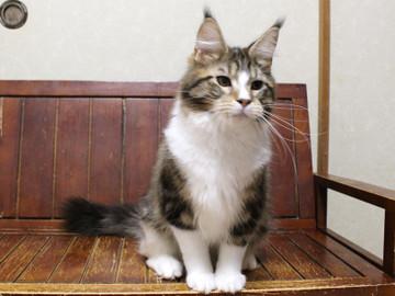 Waco_kitten3_18042104