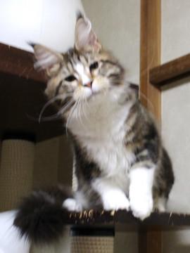 Waco_kitten3_18042105