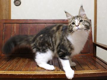 Waco_kitten3_18042106