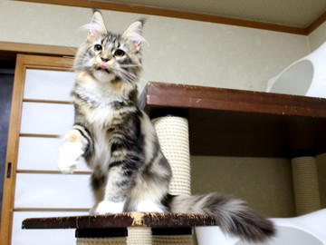 Cartier_kitten1_18043004