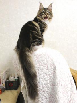Cartier_kitten1_18043008