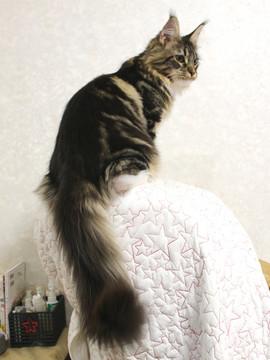 Cartier_kitten1_18043009
