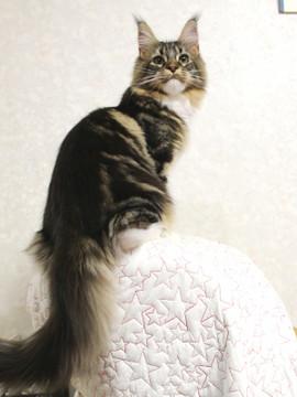 Cartier_kitten1_18043010