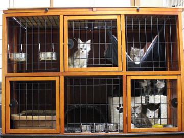 Kittens_18043001