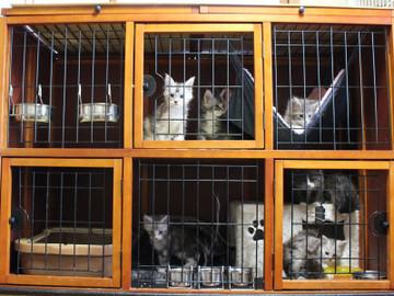 Kittens_18043002