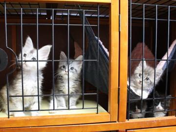 Kittens_18043003