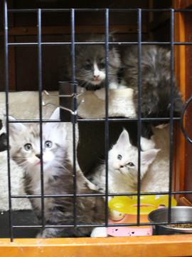 Kittens_18043004