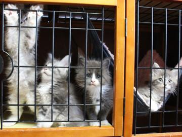 Kittens_18043005