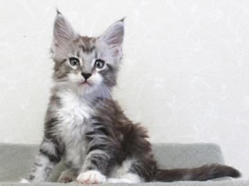 Clair_kitten2_18051402