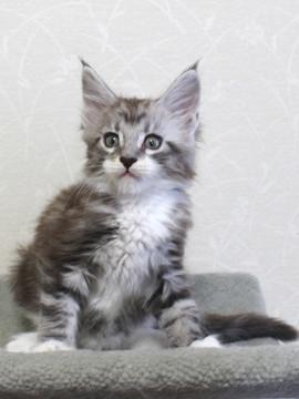 Clair_kitten2_18051403