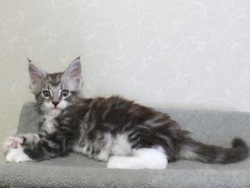 Clair_kitten2_18051406