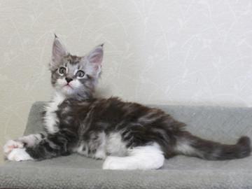 Clair_kitten2_18051407