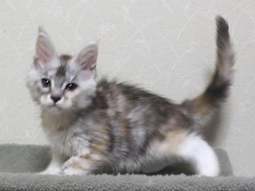 Bouquet_kitten2_18051702