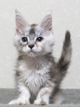 Bouquet_kitten2_18051703
