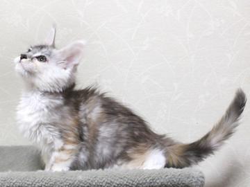 Bouquet_kitten2_18051704