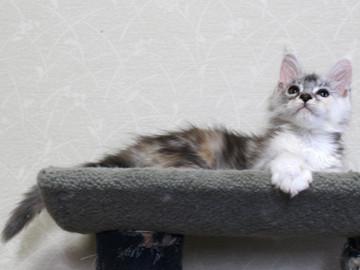 Bouquet_kitten_18051707