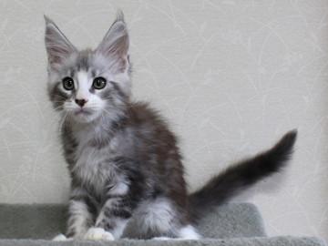 Clair_kitten1_18052801