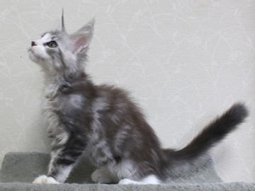 Clair_kitten1_18052802