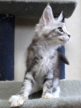 Clair_kitten1_18052805