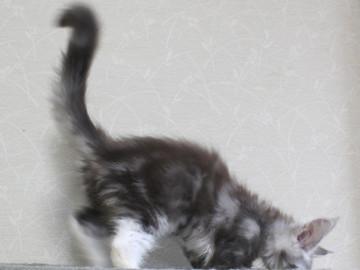 Clair_kitten1_18052806