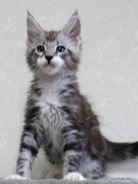 Clair_kitten2_18052902