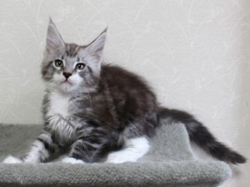 Clair_kitten2_18052903