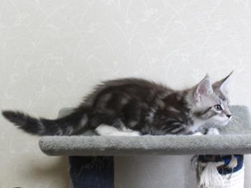 Clair_kitten2_18052904
