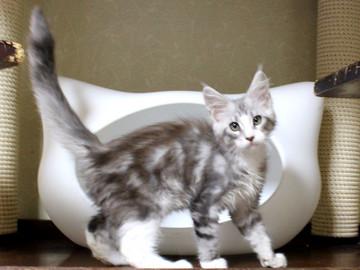 Clair_kitten1_18060602