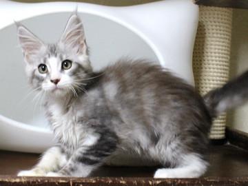 Clair_kitten1_18060603
