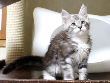 Clair_kitten2_18060602