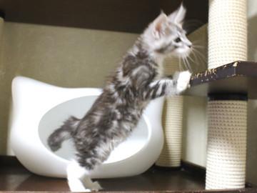 Clair_kitten2_18060603