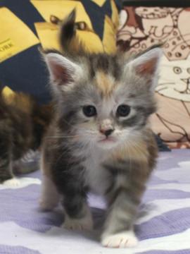 Waco_kitten1_18061301