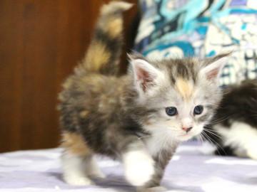 Waco_kitten1_18061302