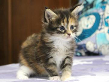 Waco_kitten4_18061301