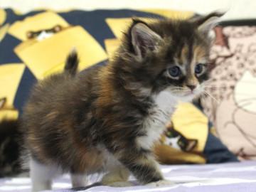 Waco_kitten4_18061303
