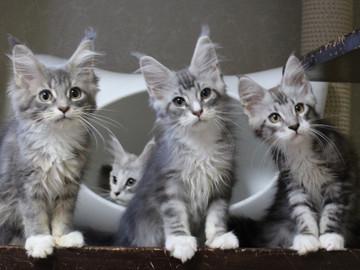 Kittens_18061601