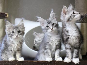 Kittens_18061602