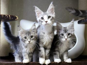 Kittens_18061603
