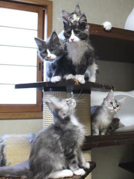 Kittens_18061604