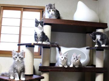 Kittens_18061605