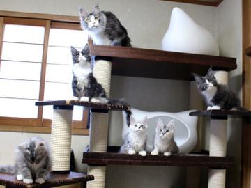 Kittens_18061606