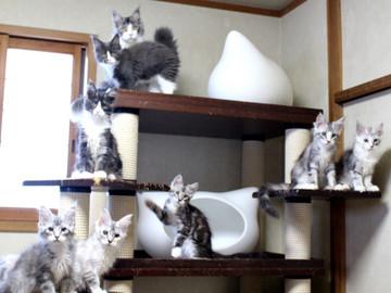Kittens_18061607