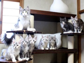 Kittens_18061608