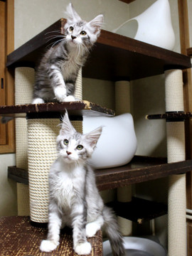 Clair_kittens_18062101