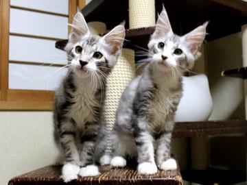 Clair_kittens_18062102