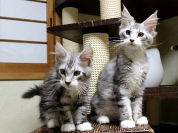 Clair_kittens_18062103