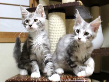 Clair_kittens_18062104
